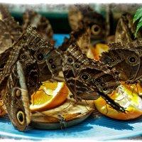 Бабочки, Обед :: Alexander Dementev
