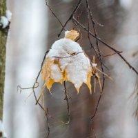 Вспоминая осень :: Андрей Щетинин
