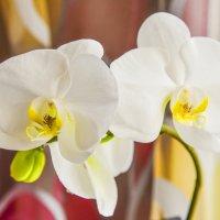 Белокурая королевская орхидея. :: юрий Амосов