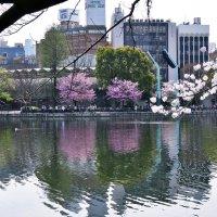 Пруд Синобадзуноикэ Токио :: Swetlana V