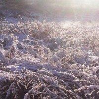Лужок зимнотравья :: Виктор Мухин