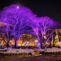 Праздничные дерева :: Александр