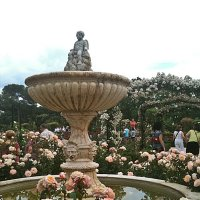 """Здравствуй Мадрид ! Сад  роз""""Rosaleda"""" :: Виталий Селиванов"""