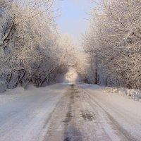 зимняя дорога :: djangalina *