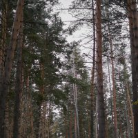 Зимний лес :: Михаил Фролов