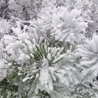Зима :: Сергей Буданов