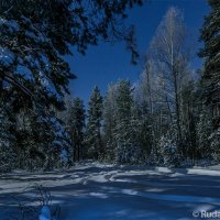 Ночной зимний лес :: Сергей