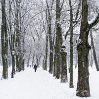 В парке :: Павел Сущёнок