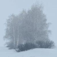 Туман зимой :: Андрей Щетинин