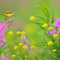 Полевые цветы :: Влад