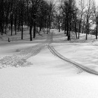 Лыжню прокладывая.. :: Андрей Заломленков