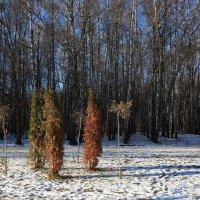 Солнечный ноябрь в Тульском парке. :: Инна Щелокова