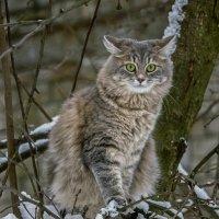 Зимняя фотосессия на дереве :: Ирина Приходько