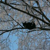 Чёрный кот :: Алёна Савина