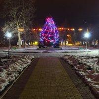 Новогодняя ёлка. :: Бронислав Богачевский