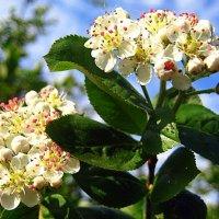 Про весну... :: оля san-alondra