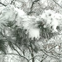 Зима усатая и лохматая :: super-krokus.tur ( Наталья )