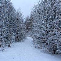 Снежно :: Катя Бокова