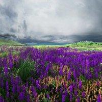 весна в Тихой бухте :: viton
