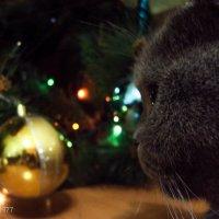Шар и кошка :: Виктор