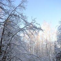 зимушка зима :: Светлана