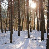 мороз и солнце :: оксана