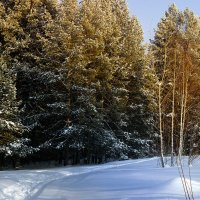 В лесу :: Олег Резенов