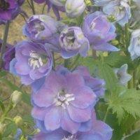на выставке цветов :: tgtyjdrf