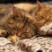 Спят усталые котята.. :: Оксана Лада