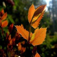 майские листики :: Александр Прокудин