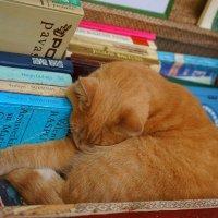 библиотекарь спит :: Sony 2 Sony 2