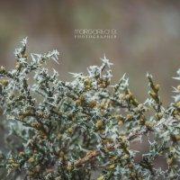 Зимние цветы :: Маргарита Б.