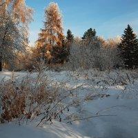 Тёплым солнечным деньком... :: Александр Попов