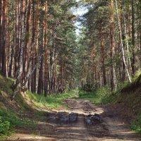 Дорога в лесу :: Дмитрий Конев