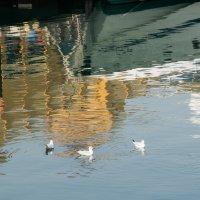 Чайки :: Kristina Suvorova