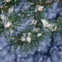 Снег кружится летает летает......... :: Paparazzi