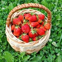 Урожай :: lapin_valerei@mail.ru
