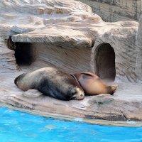 Зоопарк Нагоя Higashiyama Zoo :: Swetlana V