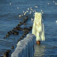 Зима и Море :: Сергей Карачин