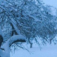 Снегопад в зимнем саду :: Анатолий Клепешнёв
