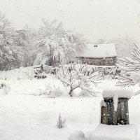 Зима в деревне :: Елена Васильева