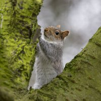 Squirrel :: Vitaliy Turovskyy