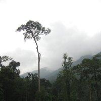 Ко Чанг. Тропический туман в джунглях. :: Лариса (Phinikia) Двойникова