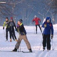 Лыжники :: Александр Михайлов