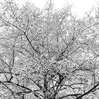 Ольха в снегу :: Gennadiy Karasev