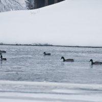 На зимовке! (2) :: Андрей Синицын
