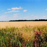 Пшеничные дали :: Михаил