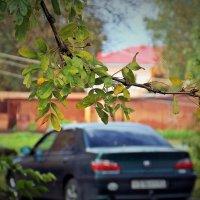 Капельки дождя на осенних листьях :: Фотогруппа Весна.