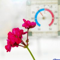 А за окном январь.. :: Андрей Заломленков