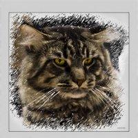Мейкун-из серии Кошки очарование мое! :: Shmual Hava Retro
